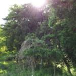 5月20日 森林(もり)の日
