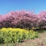 もうすぐ春ですね