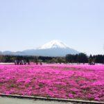 山といえば日本一の富士山★(以前撮った芝桜と富士山)